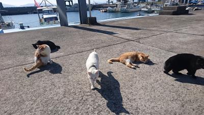 熊本に出張したついでにネコの島「湯島」に寄ってネコと魚を満喫の巻~その2~