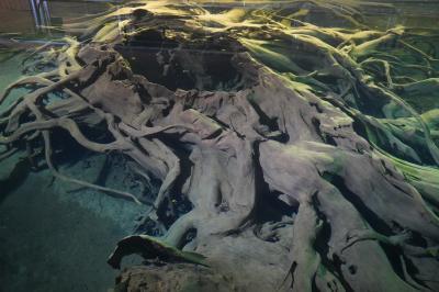呉西あちこちから魚津・黒部まで(五日目)~信長軍との攻防最後の砦、魚津城に米騒動、蜃気楼と埋没林、たてもん祭り。小さな町でも自慢は豊富です~