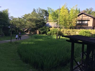 夏休み下田東急ホテルから伊豆高原 きらの里へ