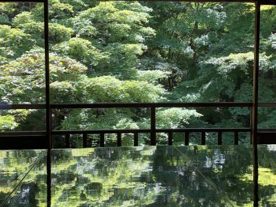 京都・瑠璃光院の青もみじ。久々のお出かけです。