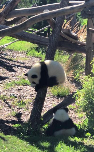 やっと双子のパンダの赤ちゃんと対面!ブルジョワな朝食も楽しんだベルリン!