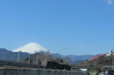 2020年2月 河津桜を見に行くはずが、渋滞で断念、伊豆の国パノラマパークで富士山見てきました