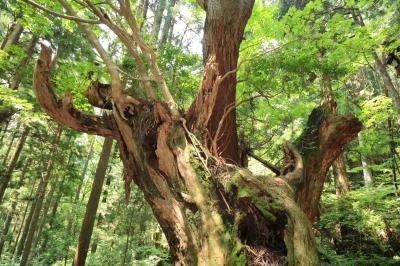 森の中の芸術品♪ 21世紀の森&モネの池♪