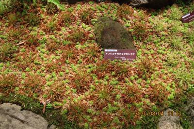 久しぶりに箱根旅行をしました⑧湿生花園その(4)世界食虫植物展