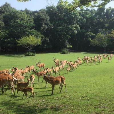 百舌鳥古墳群遊覧飛行と奈良・飛鳥の旅 4日間 4日目