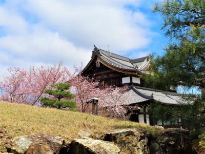 COVID-19対策の自主隔離を終えて☆京都初日ー1 東山山頂付近の桜