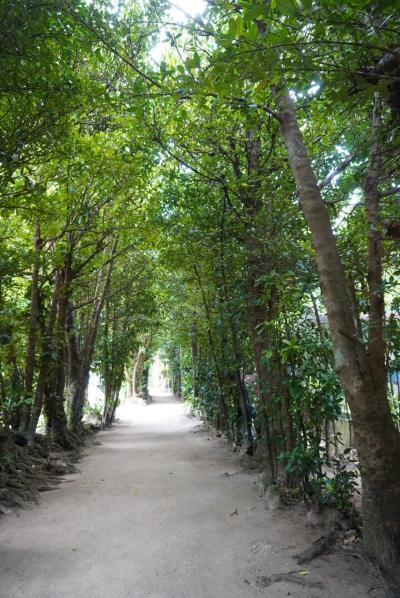 沖縄の定番観光。美ら海水族館、備瀬フクギ並木から国際通り  2日目