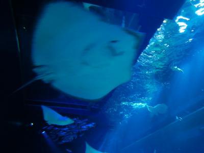 Go TOトラベル、沖縄本島へ―前編。DMMかりゆし水族館とグリーンリッチホテル沖縄名護編―