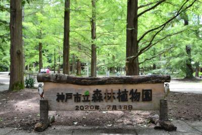 神戸市立森林植物園でアジサイを楽しむ