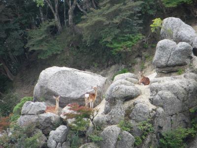 第2回 山登り鎌ヶ岳、雲母峰(愛知県)2020年08月12日