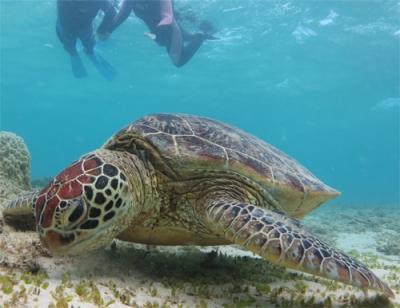 ぶらり奄美大島・加計呂麻島−青い海と固有動物たちと旨グルメ−