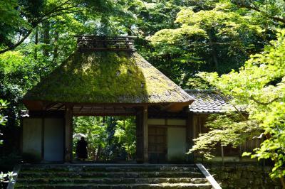 20200814-3 京都 緑がいっぱいの法然院