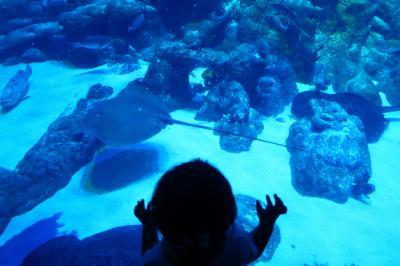 香港★一時営業再開した海洋公園へ ~海洋公園~