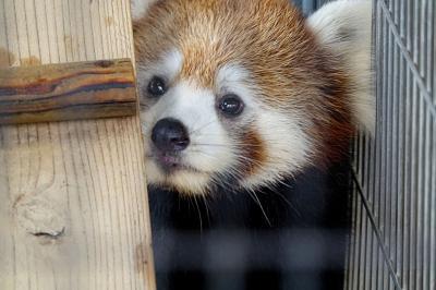 西山動物園 2年連続でキュートでフレッシュなママ爆誕!! かのこちゃん&たいよう君おめでとう!!