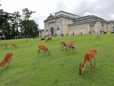 """たまにはベタな観光旅行2007  「近鉄特急""""ひのとり""""で奈良公園を訪れました。」 ~奈良~"""