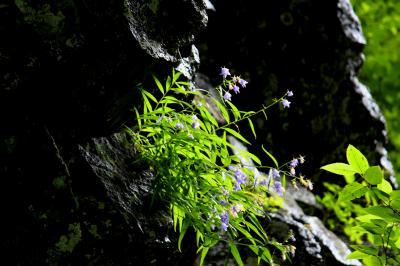 ◆秘境滝と岩沙参を求め会津下郷の観音川源流へ、Part1