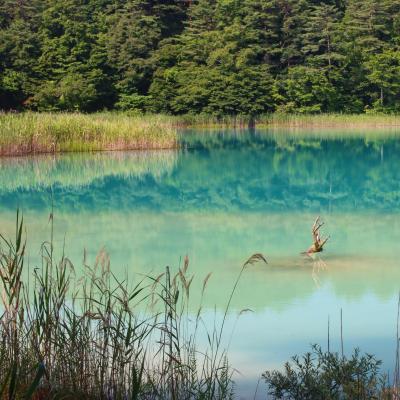 ブララブコー「3密を避けて森の中へ!夏の五色沼トレッキング」