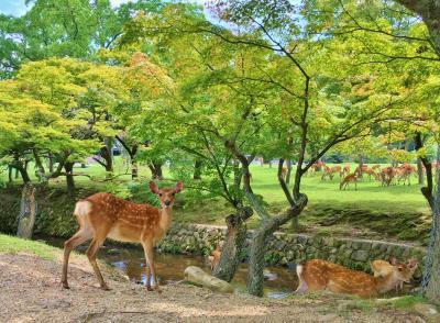 真夏の奈良へちょっと早めの夏休み☆2日目☆