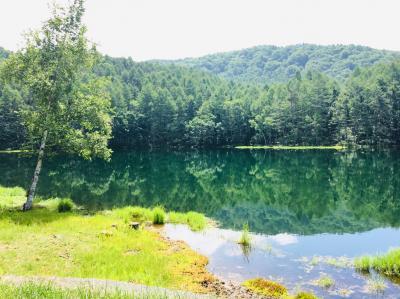 白駒池 苔の森と御射鹿池、ビーナスライン