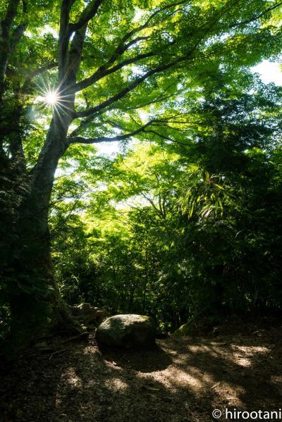やっと行けた新緑の香嵐渓