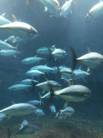 舞浜ユーラシアで温泉と葛西臨海水族園
