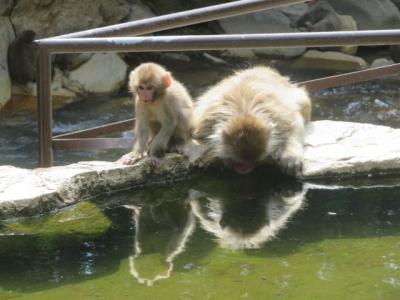信州・地獄谷野猿公苑を散策して渋温泉街を見る