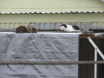猫探し【与那国島(Yonaguni Is)歩いて一周編-1・南半分】