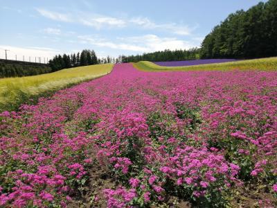 '20 夏の北海道旅行27 7泊8日ダイジェスト(札幌 富良野 美瑛 旭川)
