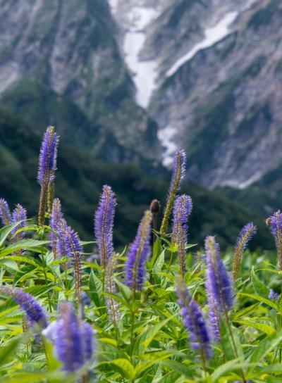 唐松頂上山荘ピストン01: ほんとのぼっち登山。お花に励まされながら少しずつ行く