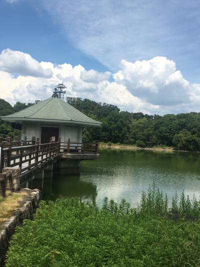 夏の山田池公園ウォーキング