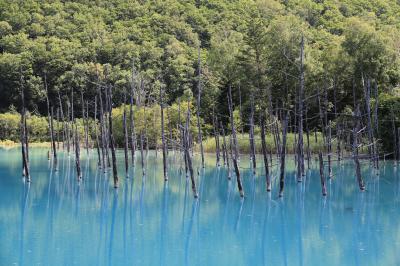 北海道 美瑛 青い池へ