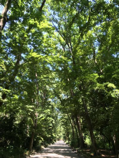 真夏の日帰り一人旅の京都1・糺の森と下鴨神社