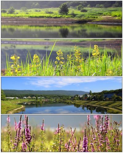 ◆立秋の羽鳥湖高原・野の花紀行