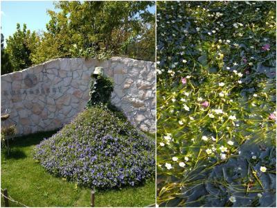 暑さの中で癒し ローザンベリー多和田&醒ヶ井の梅花藻