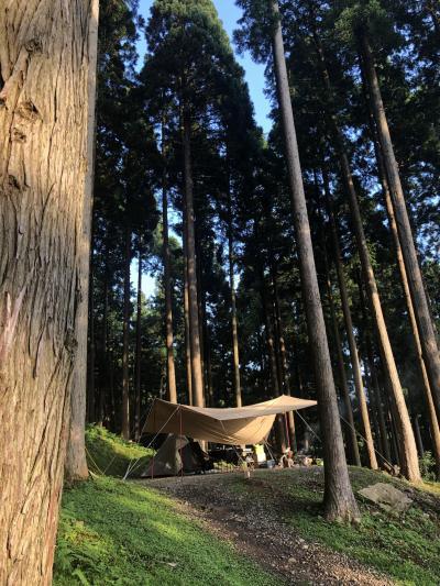 木漏れ日と星が降るキャンプ場