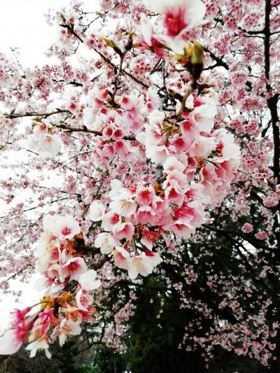 2019.03名古屋旅行<名古屋市科学館と名古屋城と栄編>