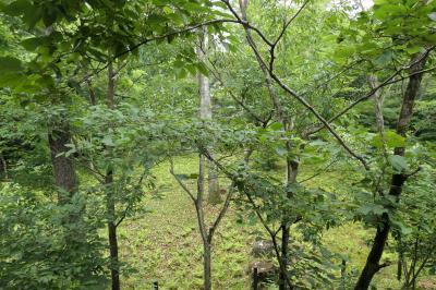 軽井沢の優雅な避暑♪ Vol.4 ☆レジーナリゾート旧軽井沢:テラスから森の風景♪