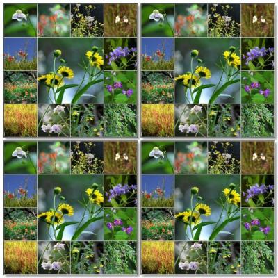 ◆福島・四季・彩々Part,92 『猛暑・酷暑・残暑の花めぐり』