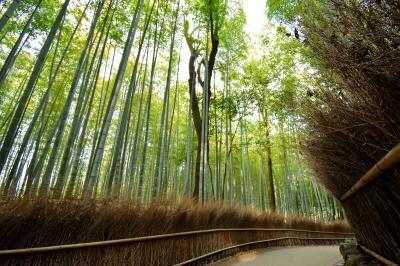 外国人観光客が消えた京都 - 中編