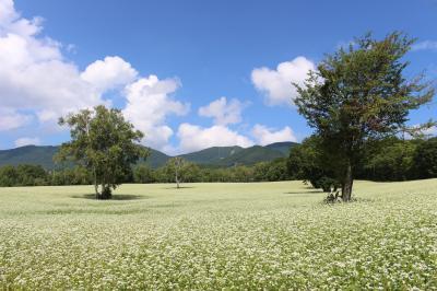 会津駒ヶ岳とたかつえのそば畑、すばらしい景色がいっぱいでした。