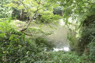 谷戸の池-2020年初秋