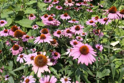 軽井沢の優雅な避暑♪ Vol.37 ☆ムーゼの森 盛夏の美しい庭園♪