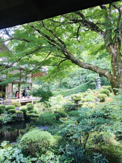色んな事に疲れたcocoroを癒してくれる京都大原三千院。今だからこその one day trip。