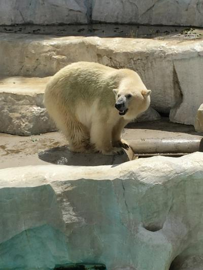 フェーン現象のなか上野動物園に行って来ました!