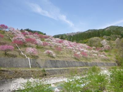 信州 花桃⇒馬肉⇒温泉⇒お城 おまけで名古屋でひつまぶし の旅