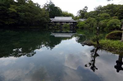 ワイン食堂 ヴィンセントの昼食 タニタ健康クラブの歩数計のデータ送信 楽寿園の小浜池