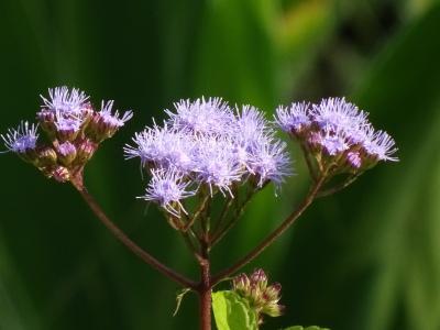 馬場花木園散歩 8月の花(31種)