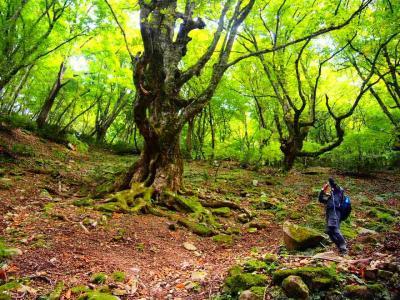 大阪の夏のおでんと神鍋高原 植村直己が愛した蘇武岳に遊んだ3泊4日  神鍋編