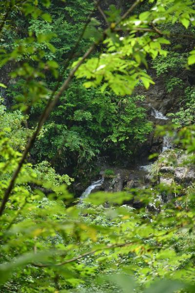 ショボい滝と言うなかれ、条件が悪かった女滝