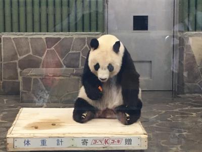 2020パンダ鑑賞記録☆タンタンちゃん生日快乐☆王子動物園&神戸北野散策&布引の滝へ